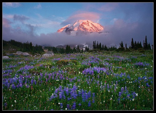 Rainier Magic