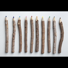 251/365: Natural born pencils