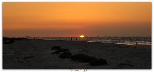 beach seashells sunrise florida si fl sanibelisland fortmyers