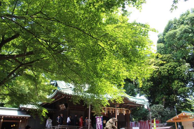 yoyogihachimangu46