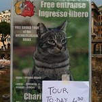 Annoye cat does not want to give you a tour.