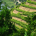 A glimpse of gold: the Douro & its vineyards.