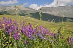 Monti Sibillini dal Pian Perduto