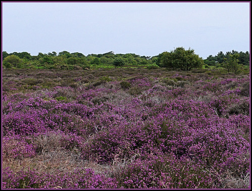 Dunwich Heath,Suffolk.