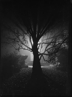 Magic Garden, by Josef Sudek 1952