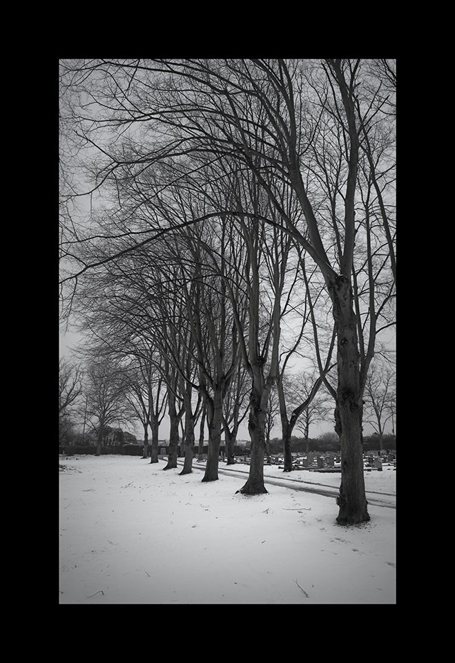 Photography: Trees Line in Snow by Nicholas M Vivian