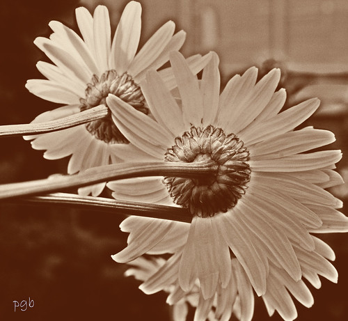 ...detrás de la belleza... by Garbándaras