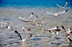 flamingo(0.0), animal migration(1.0), animal(1.0), water bird(1.0), sea(1.0), fauna(1.0), shorebird(1.0), bird migration(1.0), bird(1.0), seabird(1.0), wildlife(1.0),