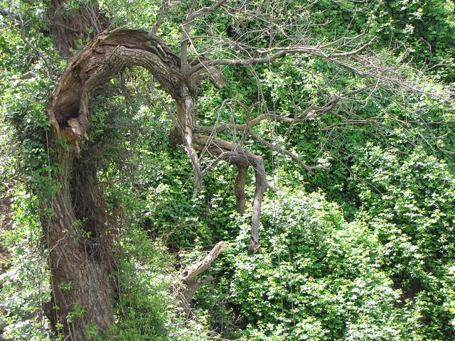 Japanese Tea Garden Tree Flickr Photo Sharing