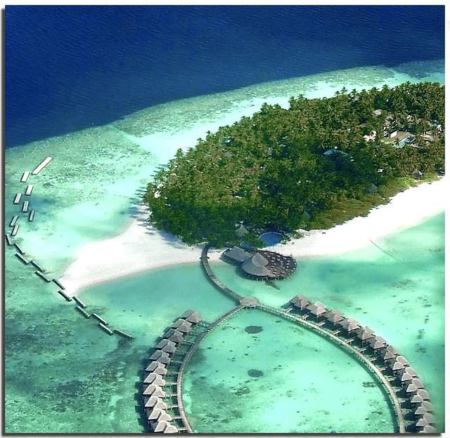 Seagull view on Vilu Reef ( Maldives )