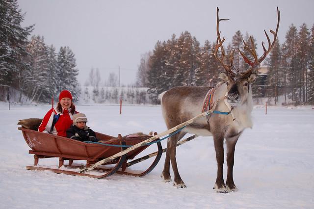 Reindeer Sleigh Ride Flickr Photo Sharing