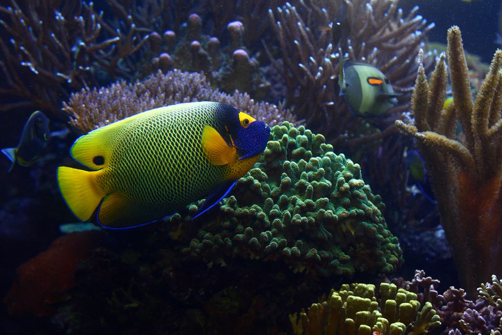 Marine fish fm forums for The fish fm