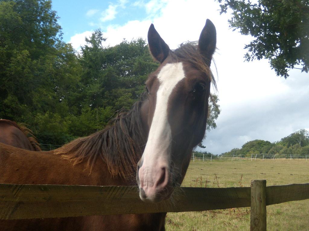 Horse Crowthorne to Sandhurst