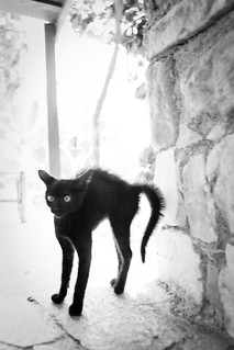 skinny black cat with back arched