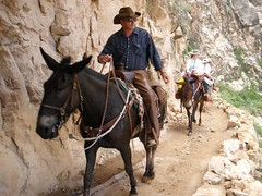 animal sports, equestrianism, mule, trail riding, sports, endurance riding, horse,