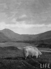 Spittal of Glenshee, Scotland, by E. O. Hoppe 1925