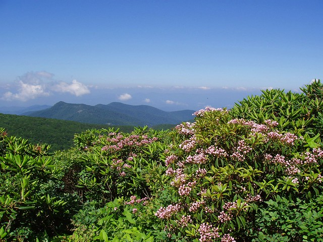 Craggy Gardens Rhododendron Blue Ridge Parkway North Carolina Flickr Photo Sharing