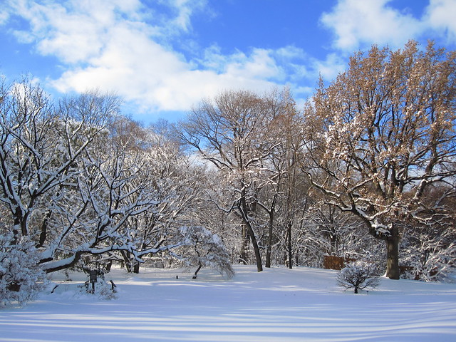 Winter views at BBG. Photo by Rebecca Bullene.