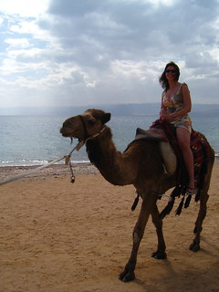 camel ride on Aqaba beach, Giordania