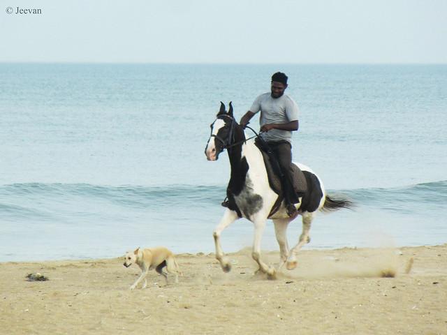 Dog racing a Horse