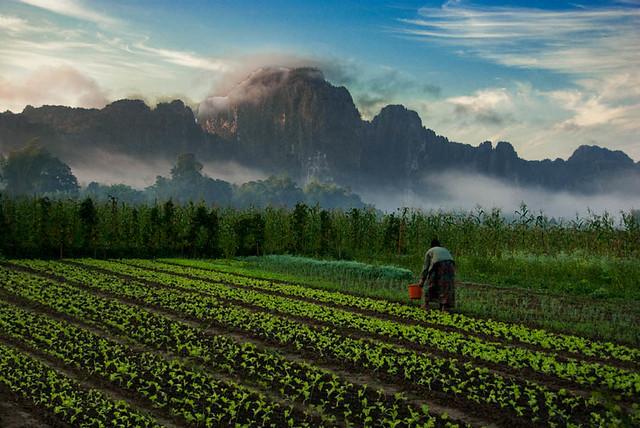 "Vang Vieng ""Morning In The Garden"""