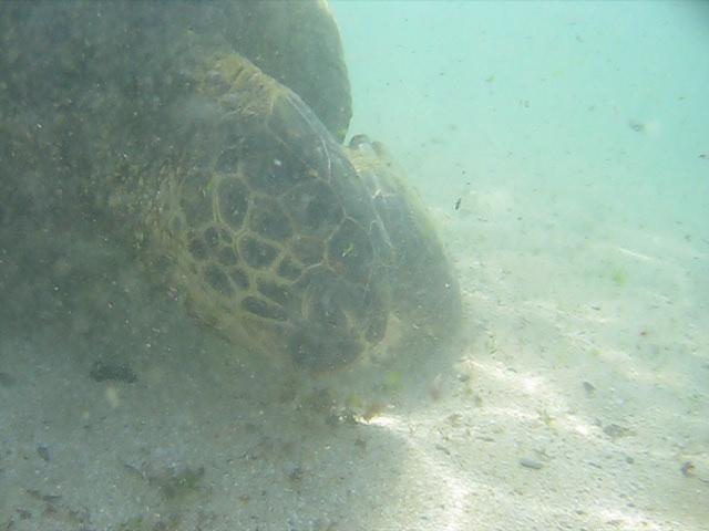 ahu: Turtle Beach Flickr - Photo Sharing!