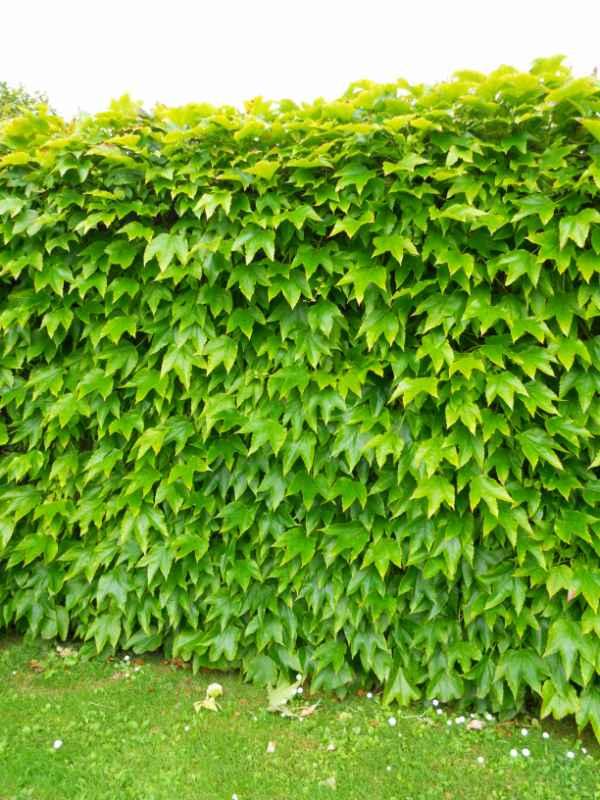 Dise o de jardin en chalet adosado en madrid - Bricomania jardineria ...