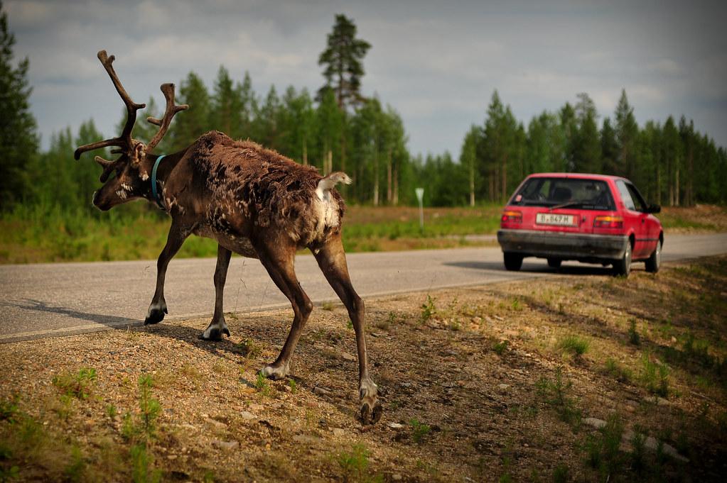 Reindeer & LRC
