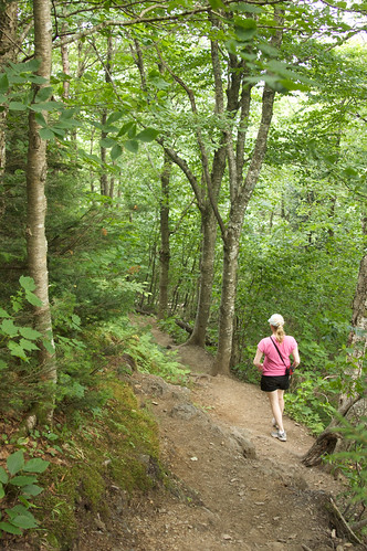 trees sarah vermont unitedstates hiking trail lincoln 365 5star