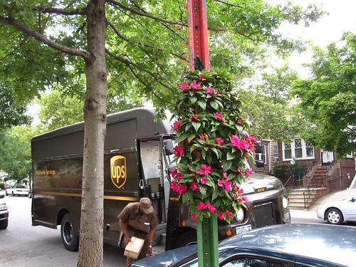 Greenest Block In Brooklyn Contest