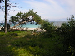 Pefkias (Pines) Xylokastrou