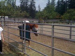 fence, ranch, horse,