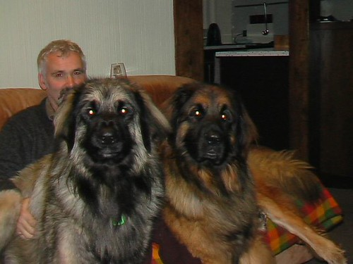 Alan an Lesleys Leonbergers