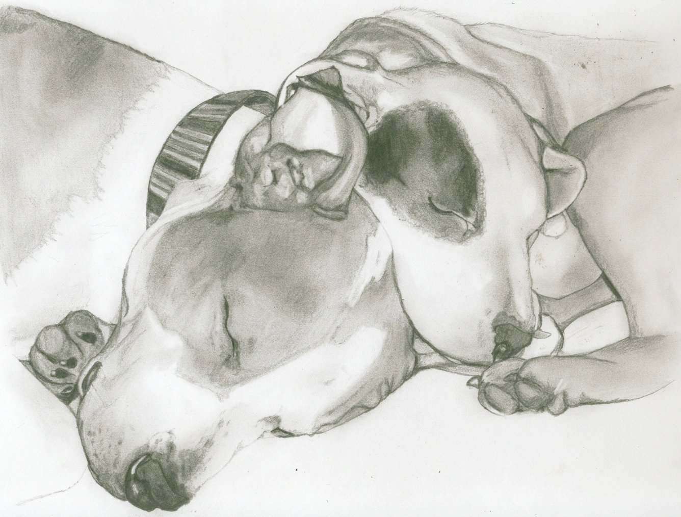 Pitbull dog drawings in pencil - photo#28