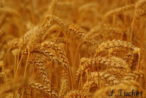http://farm5.staticflickr.com/4095/4885798964_e3a6cb3f05.jpg
