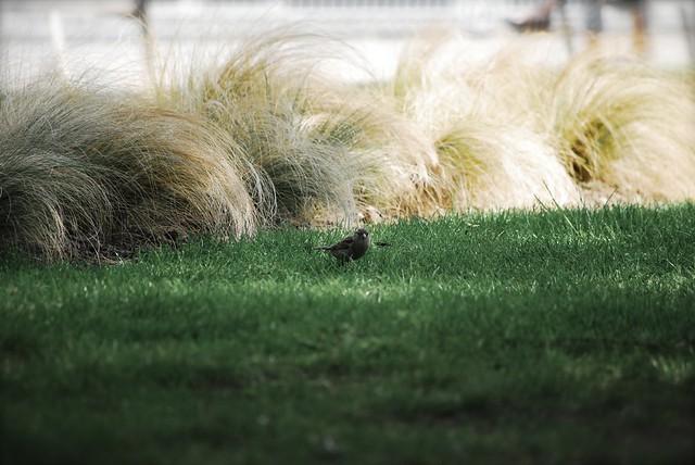 Jardin anglais gen ve flickr photo sharing for Jardin anglais geneve suisse