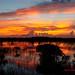 Everglades National Park Sunrise by kevansunderland