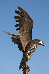 hawk(0.0), falcon(0.0), buzzard(0.0), harrier(1.0), animal(1.0), bird of prey(1.0), wing(1.0), fauna(1.0), beak(1.0), bird(1.0), wildlife(1.0),