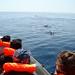 Observação de Golfinhos Algarve