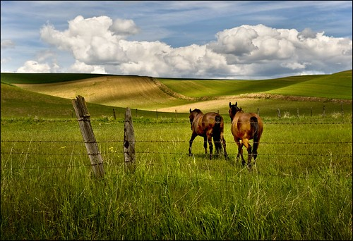 horses washington farm palouse