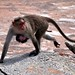 Monkeys by gus lopez