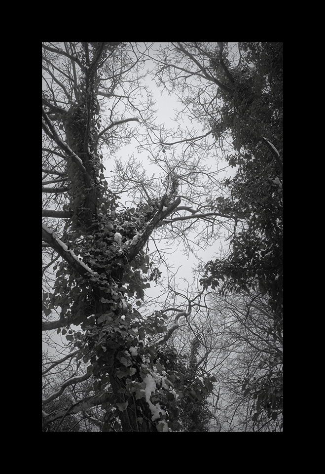 Photography: Cemetery Canopy by Nicholas M Vivian