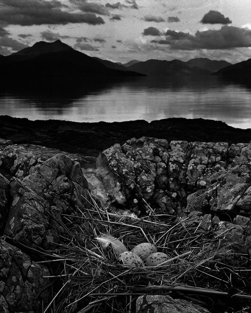 Gull's Nest, Isle of Skye, by Bill Brandt 1947
