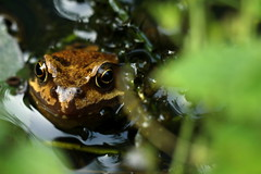 frog(0.0), animal(1.0), amphibian(1.0), toad(1.0), nature(1.0), macro photography(1.0), green(1.0), fauna(1.0), close-up(1.0), wildlife(1.0),