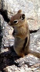 squirrel(0.0), fox squirrel(0.0), gerbil(0.0), animal(1.0), rodent(1.0), fauna(1.0), chipmunk(1.0), whiskers(1.0), wildlife(1.0),