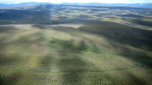 Mottled hillsides north of Fairbanks Alaska
