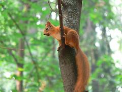 Squirrel got a nut