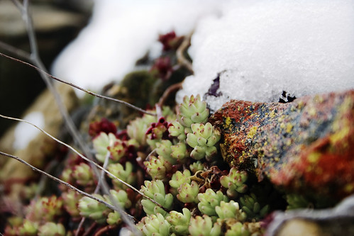 Detalle tras nevada