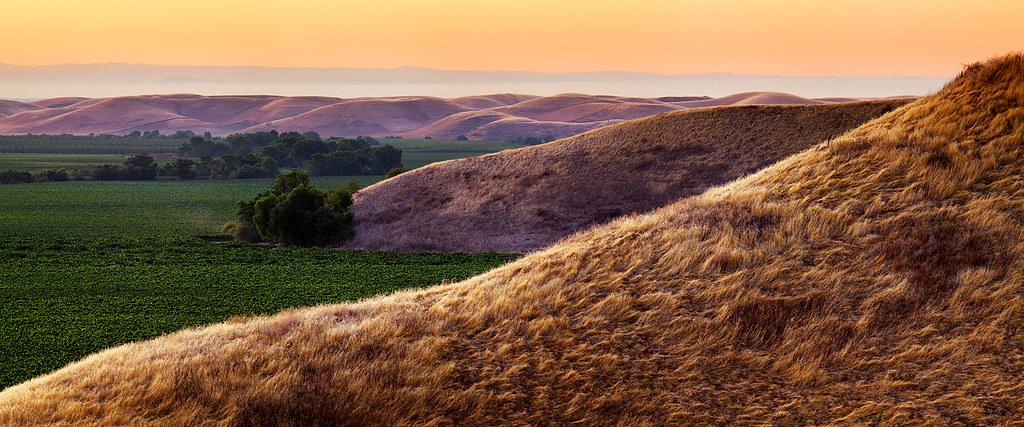 Lion's Mane: Dunnigan Hills, CA