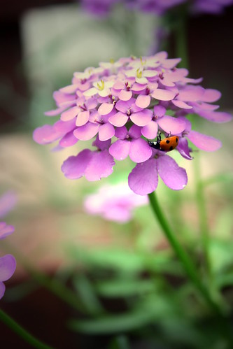 Hello there little lady bug by emma.buckley